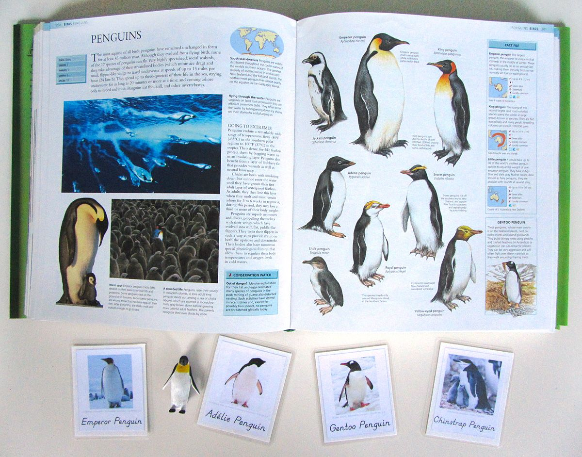 Animals Of Antarctica For The Montessori Wall Map