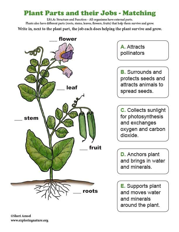 Learn About Plants And The Ngss On Exploringnature Org