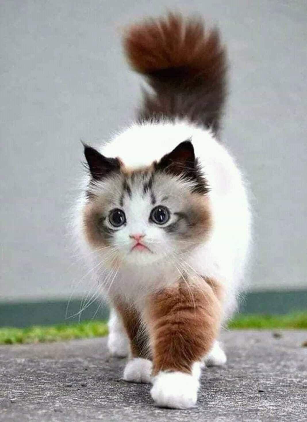 Pin By Marina Vedernikova On Beautiful Birds And Animals Cute Animals Pretty Cats Cute Cats