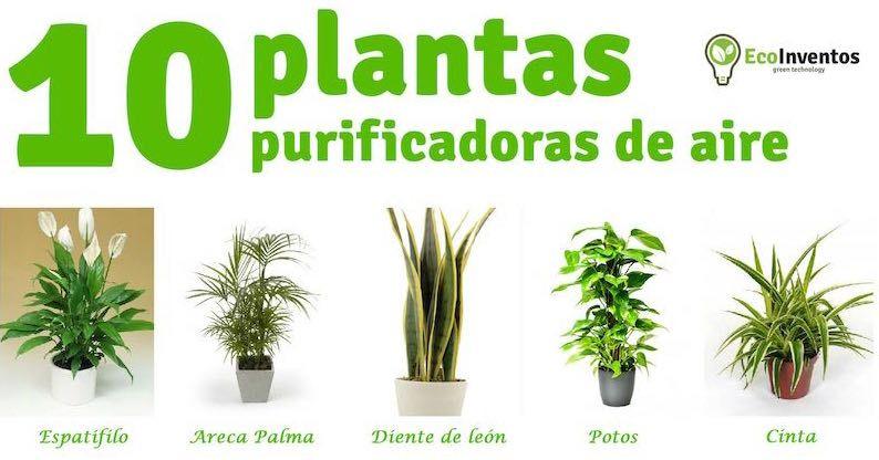 Plantas purificadoras de aire 794 416 Plantas limpiadoras de aire
