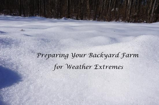 Preparing For Weather Extremes On Your Backyard Farm The Backyard Farming  Connection Blog Grit