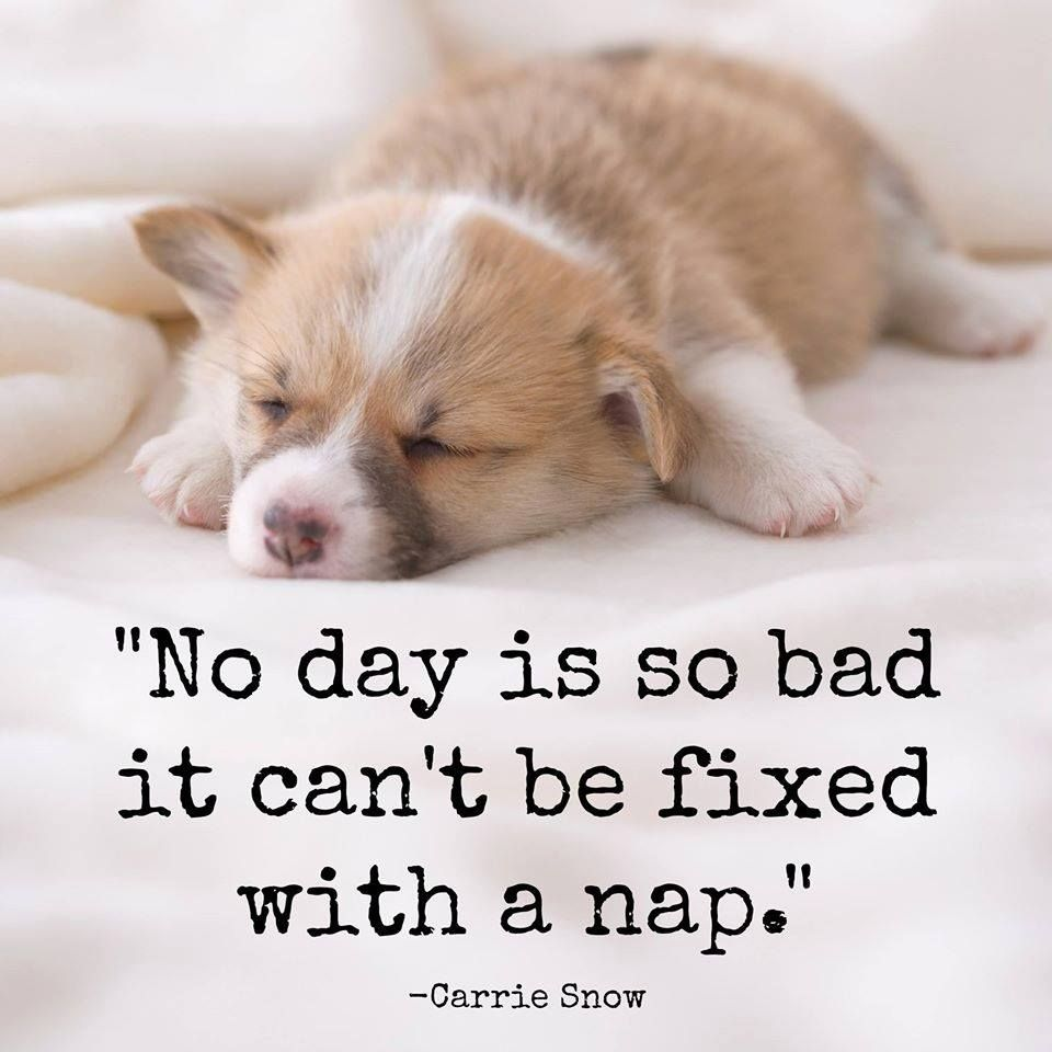 Pin By Nas Nor On Quotes Dog Quotes Sleeping Dogs Corgi Sleeping