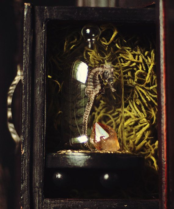 $30 Citrine & Sea Mini Cloche Terrarium by BlackwoodAndBriar on Etsy