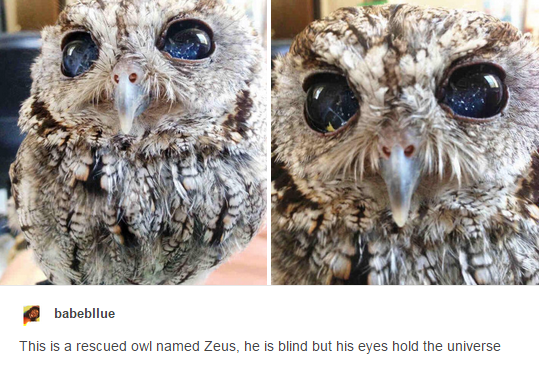An owl with the universe in their eyes