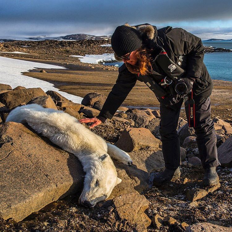 """Last summer I traveled with a group of friends to Svalbard, Norway in search of polar bears. We went to my favorite spot where I have always been able to…"""