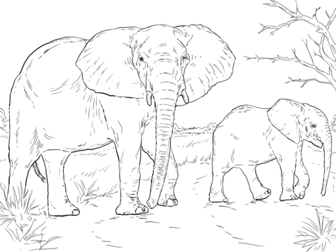 african-elephant-mother-and-baby-coloring-page.png (PNG-Grafik, 480 ...