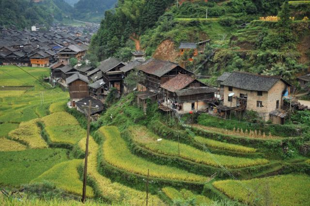 Image detail for -China - Terraced rice fields