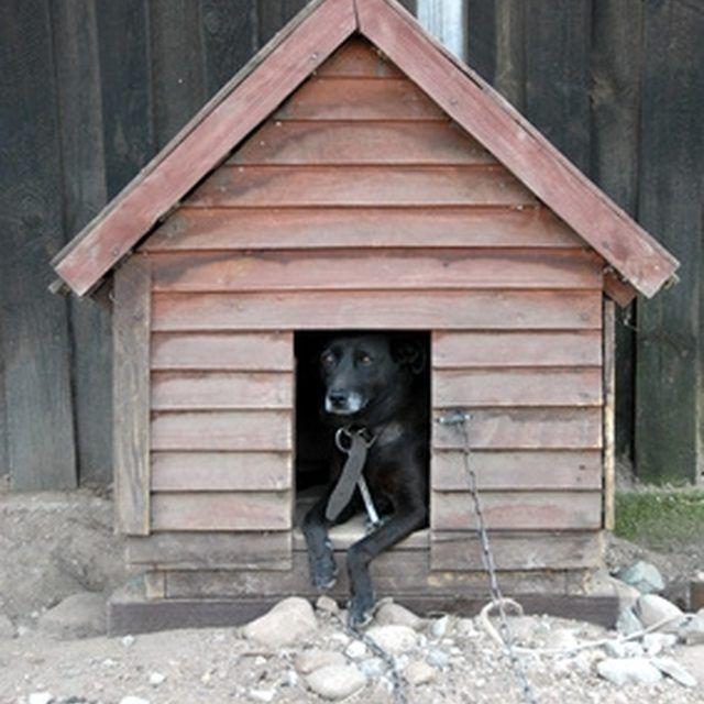 Build A Dog House For Your Extra Large Dog Extra Large Dog