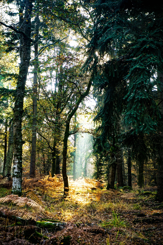 Denny Wood New Forest United Kingdom Sony Ilce 5100 Fcfcfb Vintage Nature Photography Landscape Landscape Photography