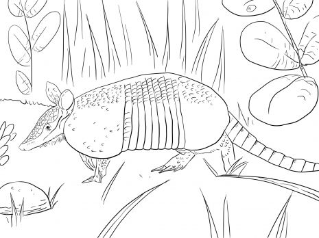 Amazing Printable+pictures+of+armadillo | Nine Banded Armadillo Coloring Page