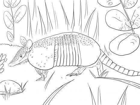 armadillo coloring page # 2