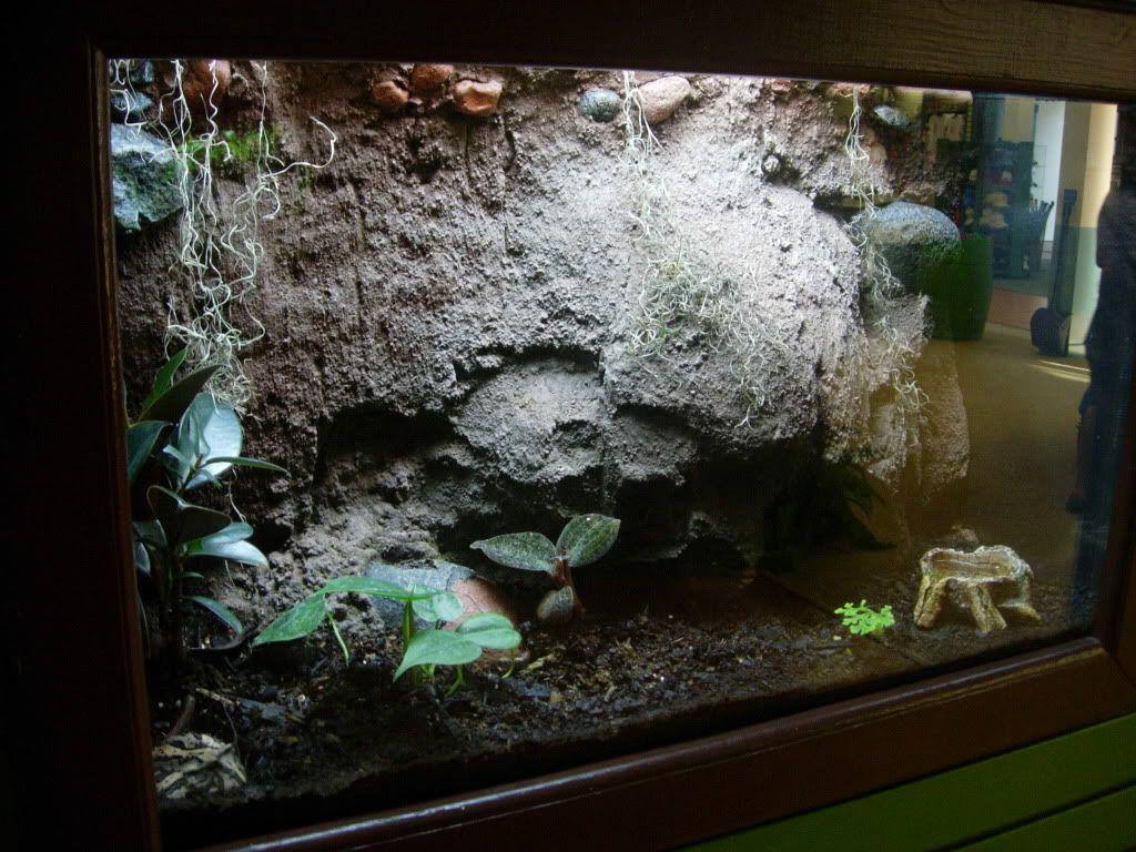 leopard gecko terrarium diy pinterest. Black Bedroom Furniture Sets. Home Design Ideas