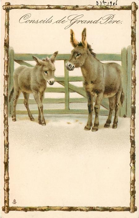 Conseils De Grand Pere Two Donkeys Stand In Front Of Green Wooden