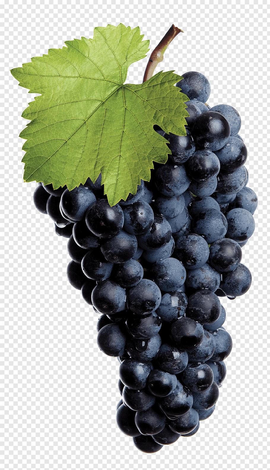 Common Grape Vine Red Wine White Wine Isabella Purple Grape Logo Png In 2020 Grapes Grape Vines Green Grapes