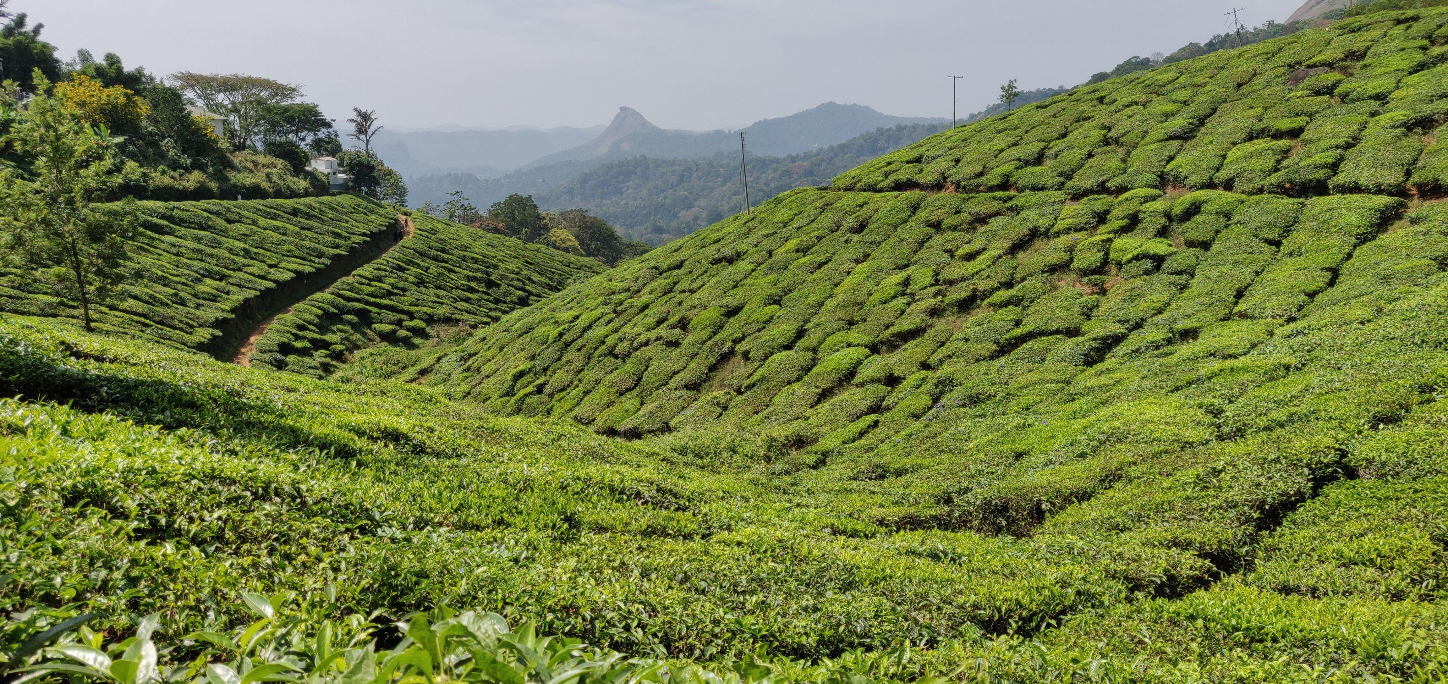 Munnar Tea Gardens in 2020 Scenic waterfall, Munnar, Scenic