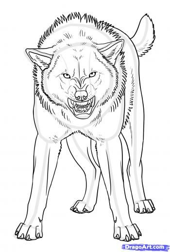 How To Draw An Angry Wolf Step By Step Drawing Guide By