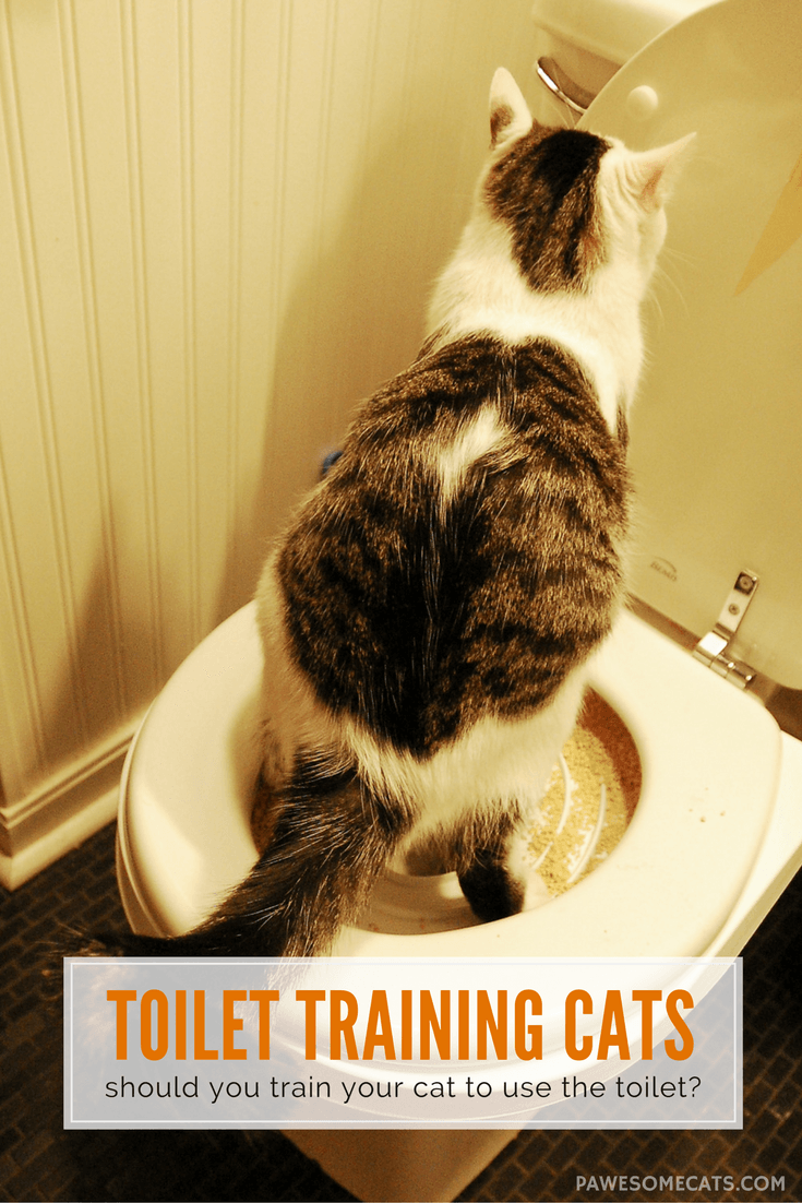 Should You Train Your Cat To Use The Toilet Pawesome Cats Cat Toilet Training Cat Training Cat Care