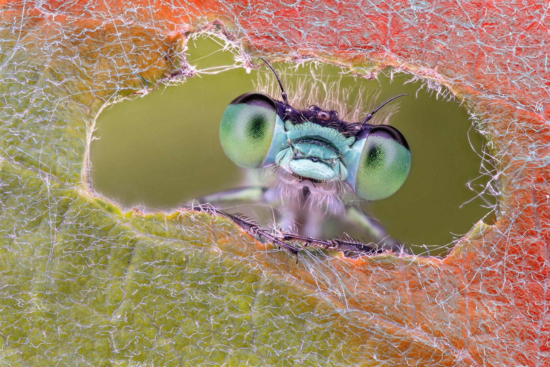 Смешные картинки насекомое