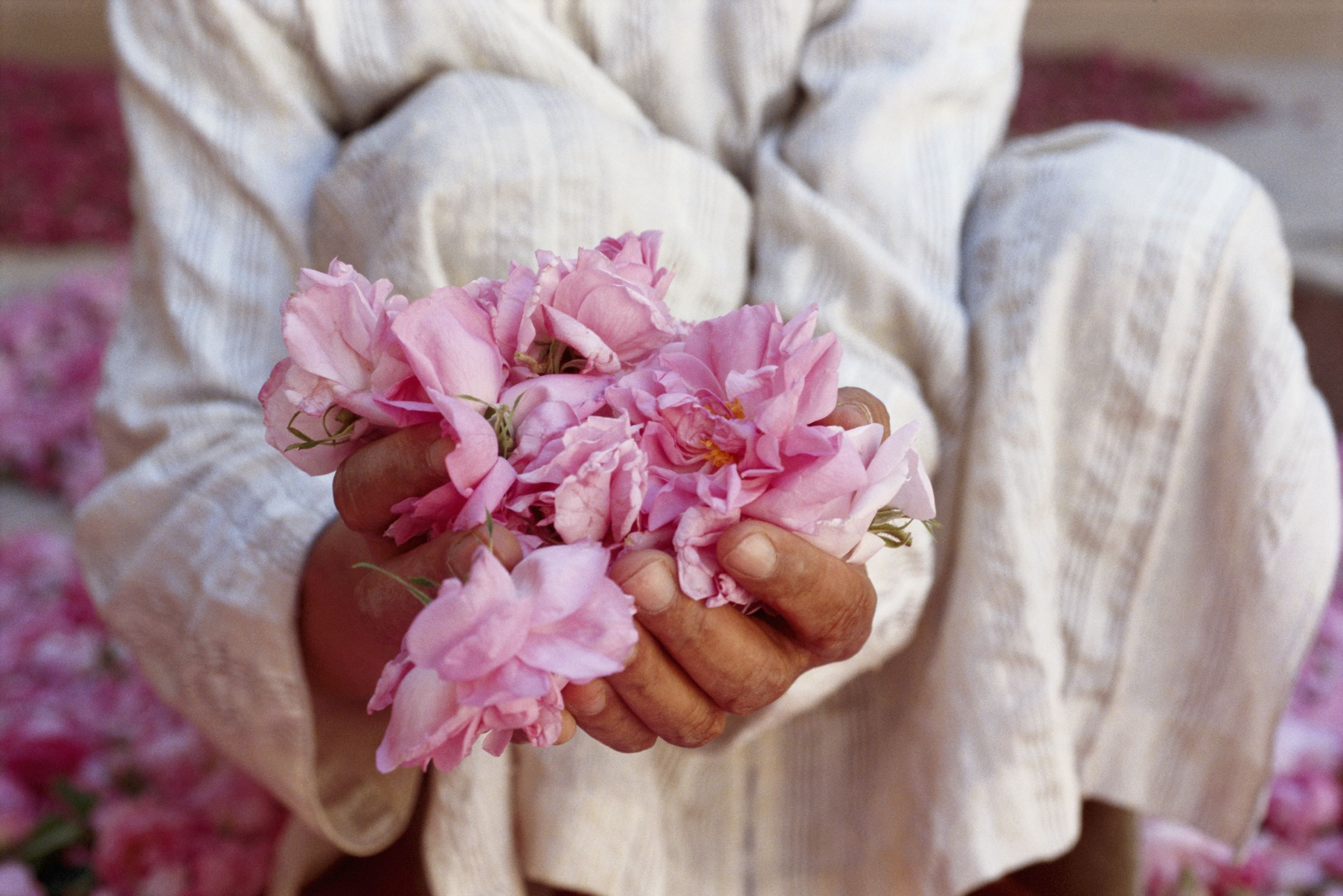 May festivals around the world Morocco, Rose petals