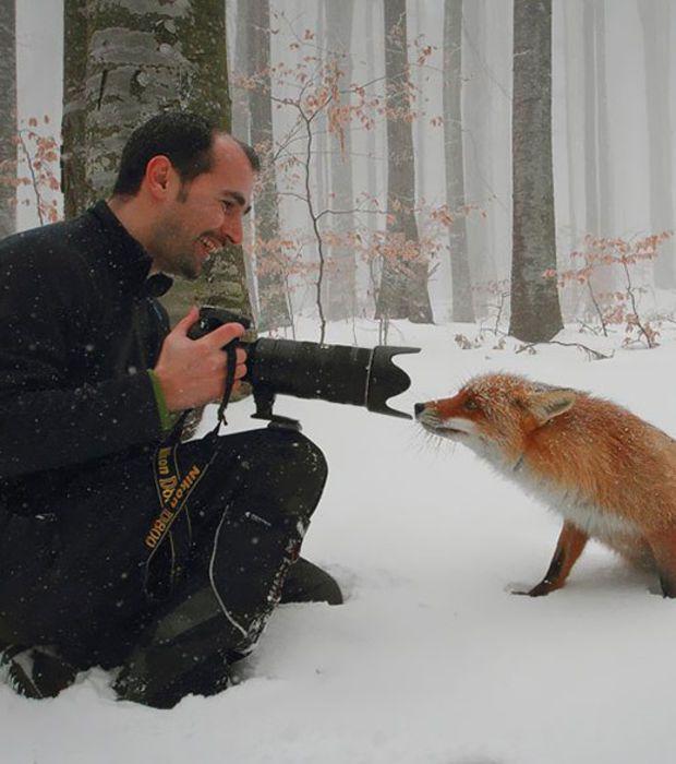 Photo : Ce renard a visiblement envie de se faire tirer le portrait