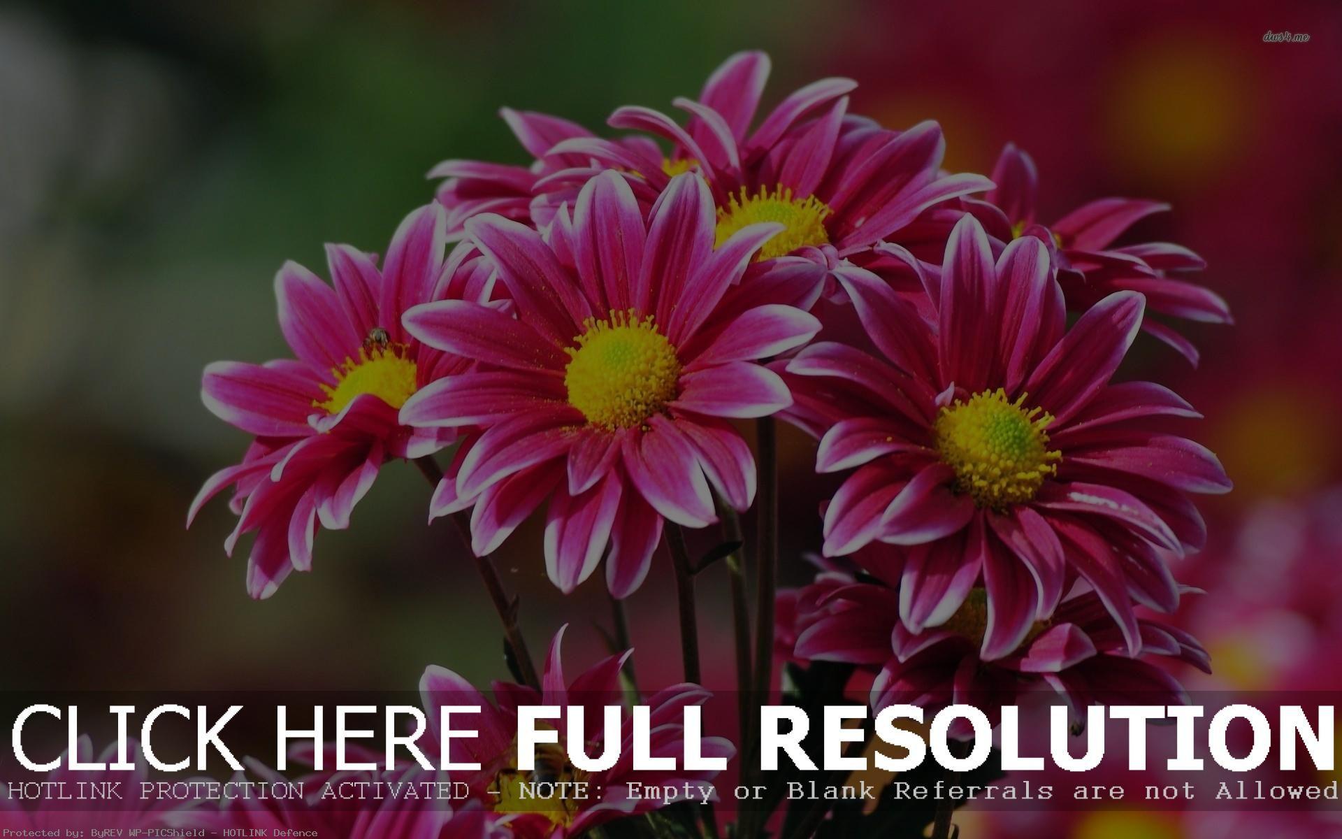 Pink Flower Desktop Wallpapers Wallpaper 1024x768 Flowers 50