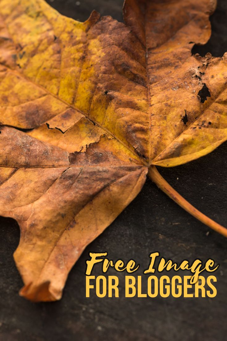 Free Photography Stock Dry Maple Leaf On Dark Background Quite Like Free Stock Photos