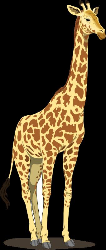 free clipart of giraffe - photo #23