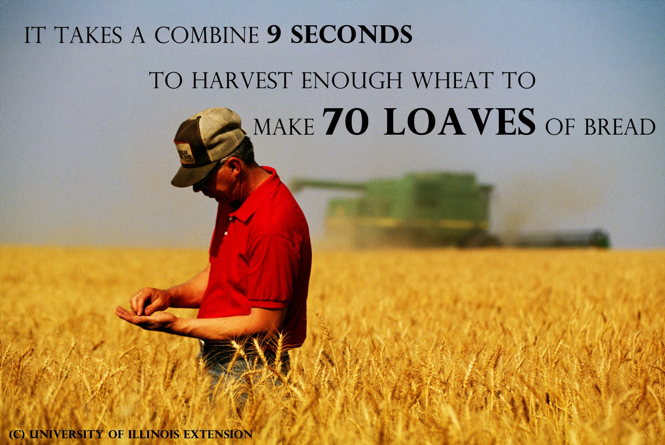 Wheat Is Grown On More Land Area Worldwide Than Any Other Crop And