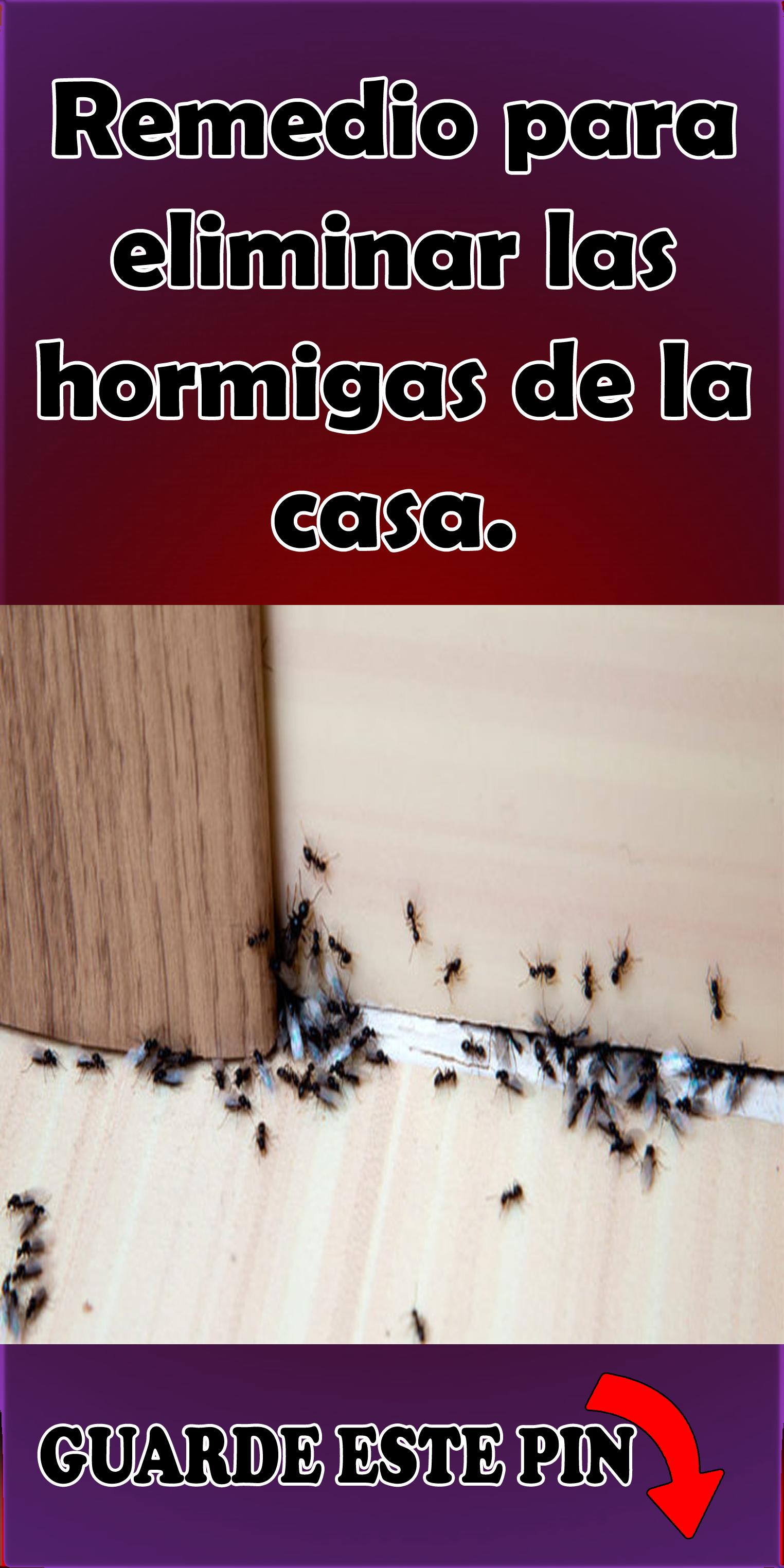 Como Acabar Con Las Hormigas 6 Insecticidas Naturales Para Eliminar Hormigas Caracoles Y