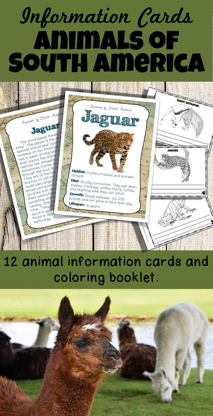 Box Cours De Cuisine A Great Set Of Vivid South American Animal Cards That Can Be Used