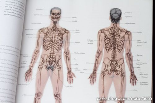 Anatomy for the Artist- by Sarah Simblet and John Davis | Art ...