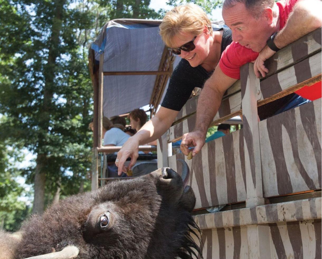 Annual Family Membership To The Catoctin Zoo Zoo Wildlife Preserve Wildlife