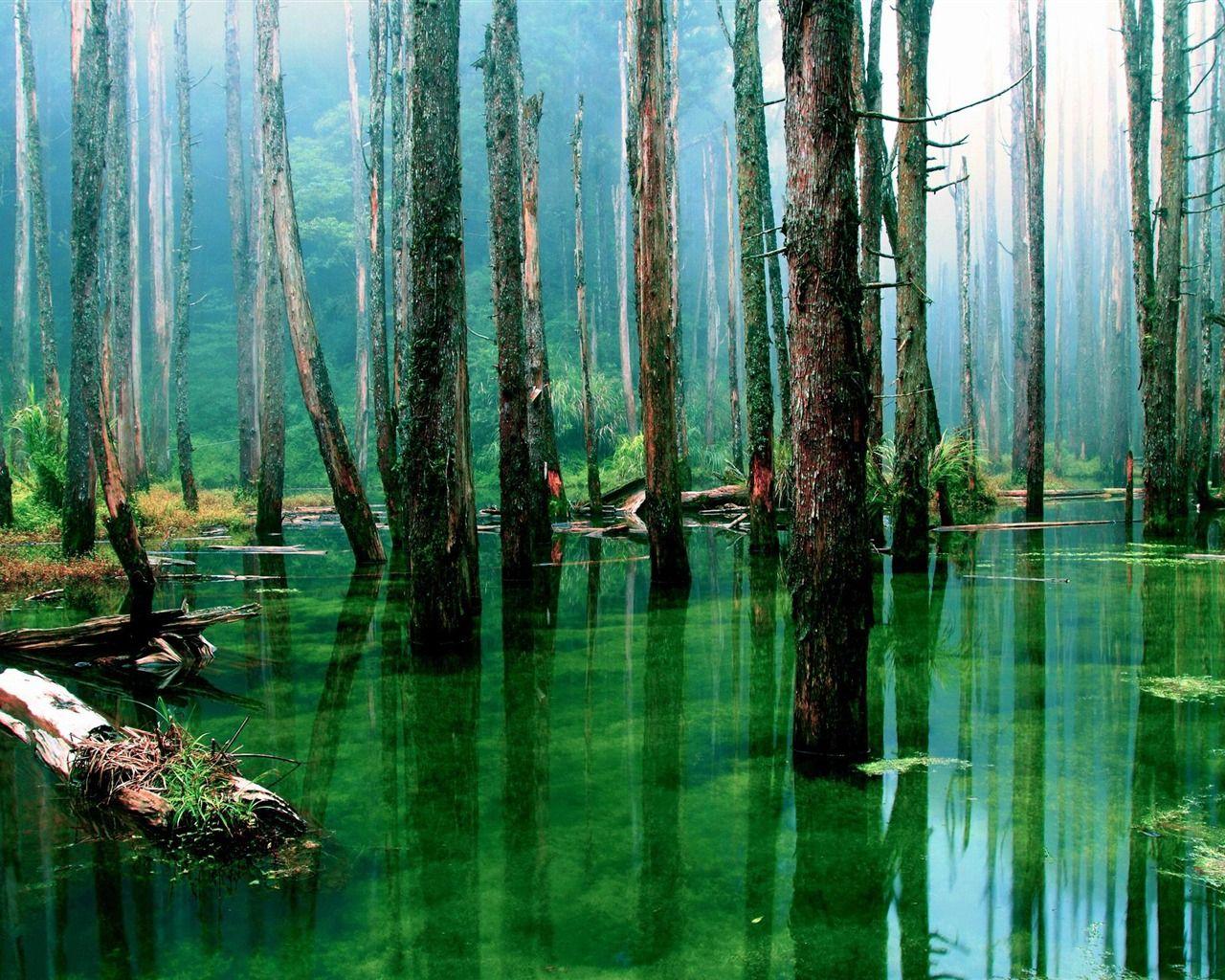 浸水林 森林の風景の壁紙 1280x1024 壁紙ダウンロード 風景の壁紙 風景 森林