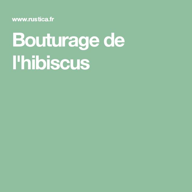 Bouturage de l\'hibiscus | Hibiscus, Le jardin et Jardins