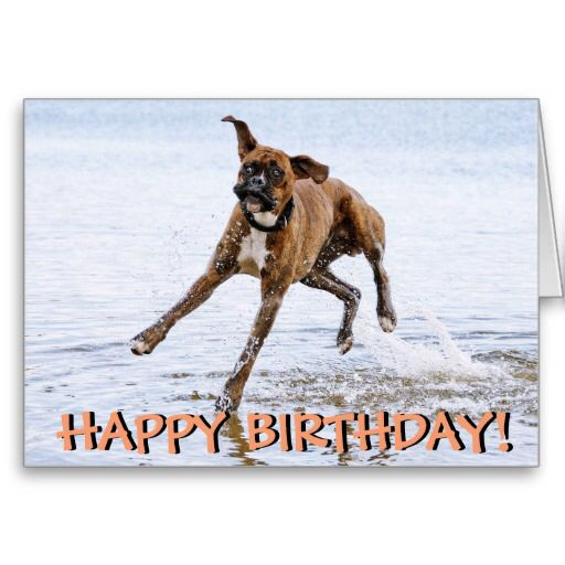 Image From Http Rlv Zcache Com Funny Boxer Dog Birthday Card