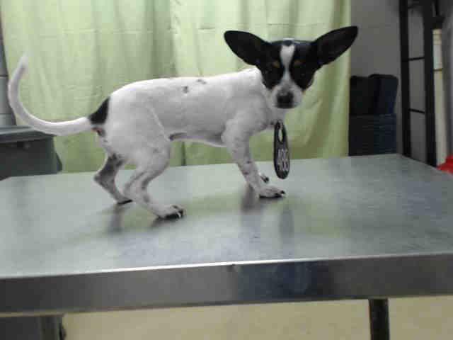 Houston Texas Petharbor Com Animal Shelter Adopt A Pet Dogs