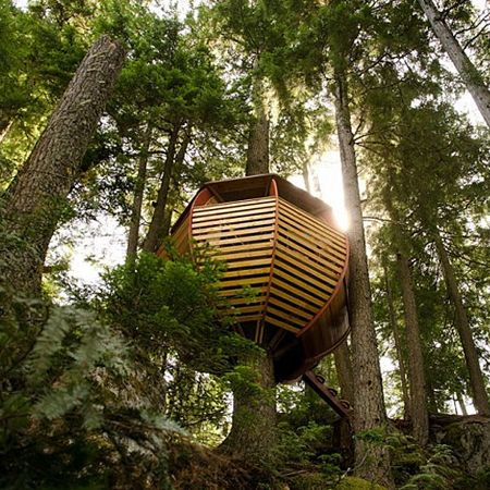 Baumhaus - treehouse