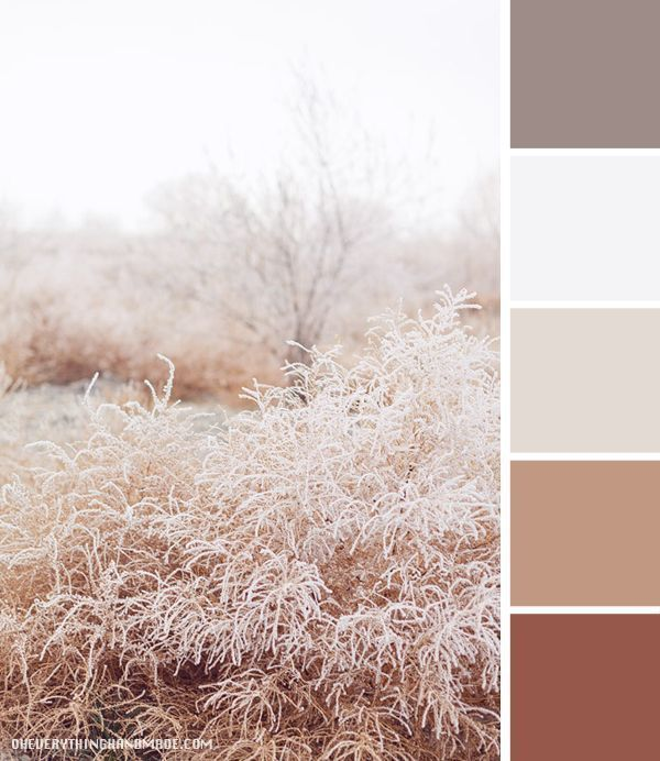 Color Palette // The Beauty