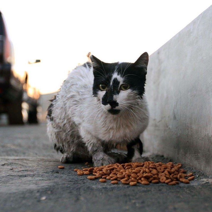 Catsofinstagram Catstagram Cats Tnrqatar Doha Qatar Cornish