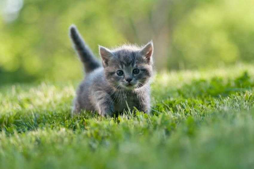 50+ Unique Names for Gray Cats and Kittens Grey cat