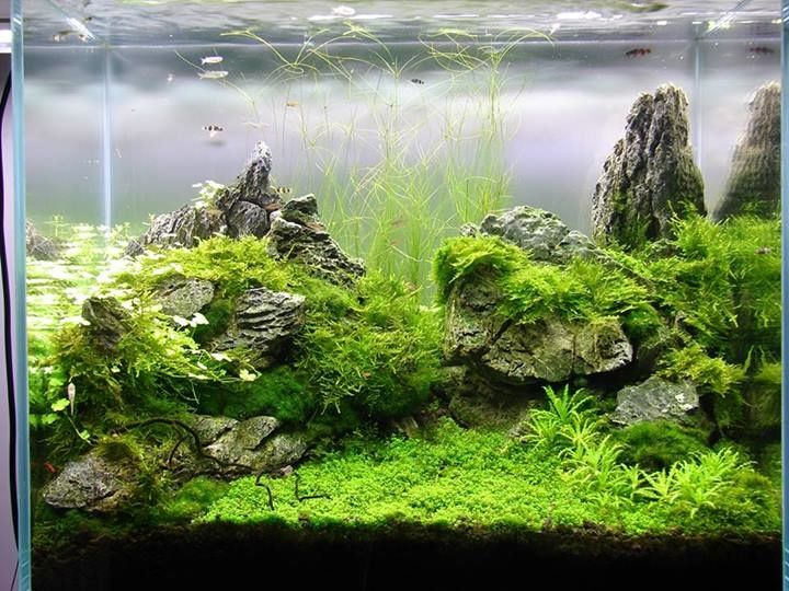 Epingle Sur Aquascape