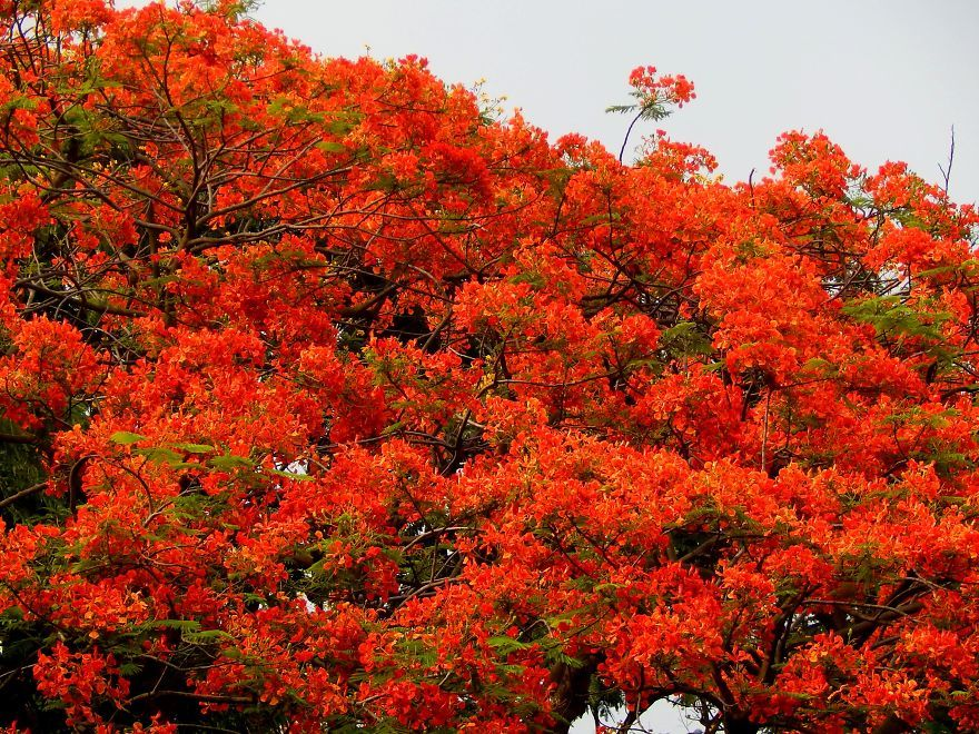 I thought of getting friendly with the most colourful tree