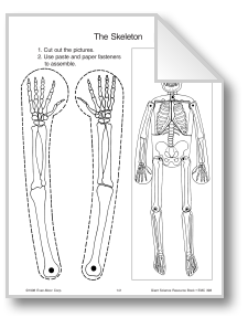 Halloween Learning: Human Body: Skeleton; download free
