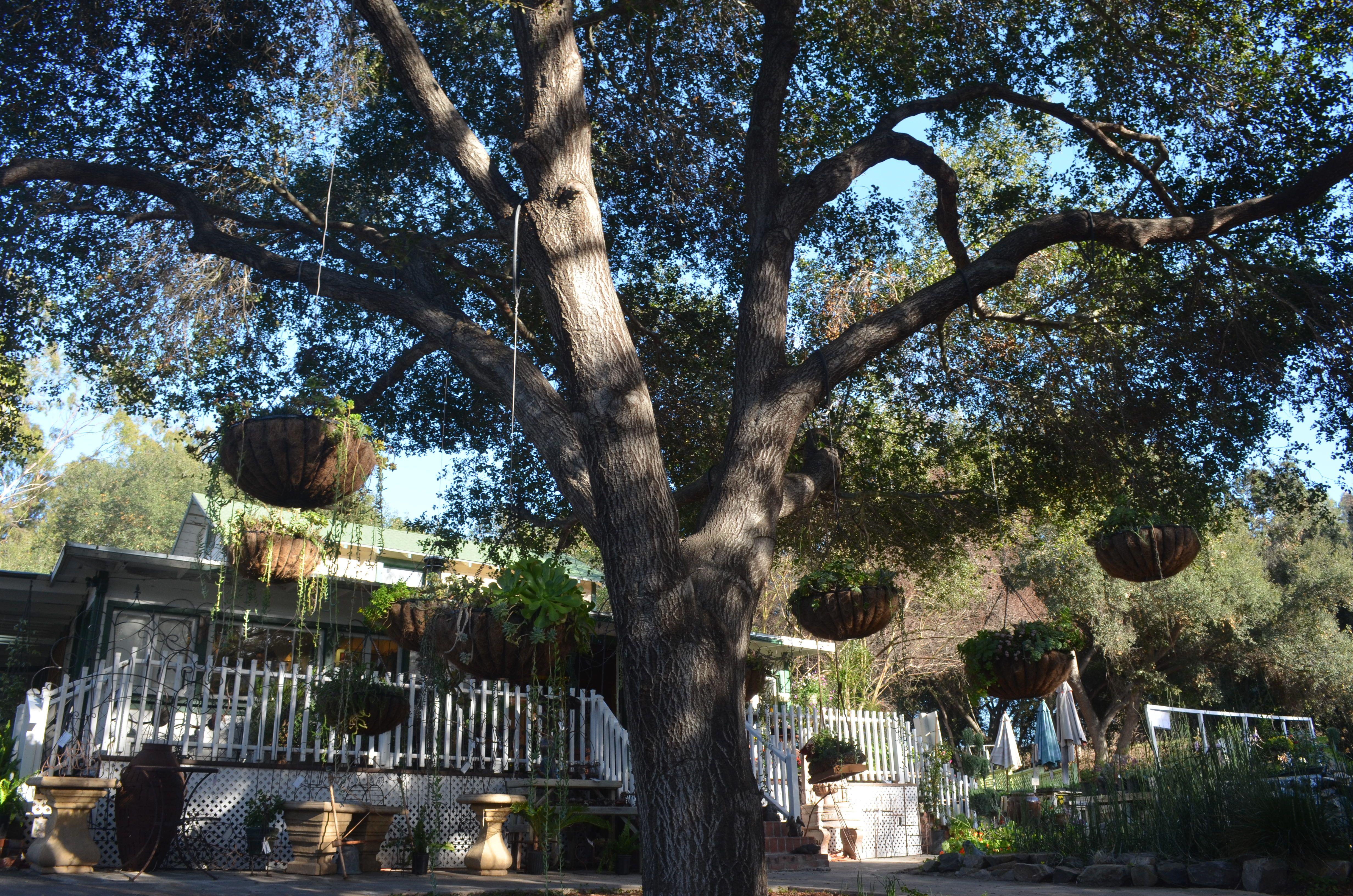 2fec9b7b3735598ec924660cd8398396 - Myrtle Creek Botanical Gardens & Nursery Fallbrook Ca