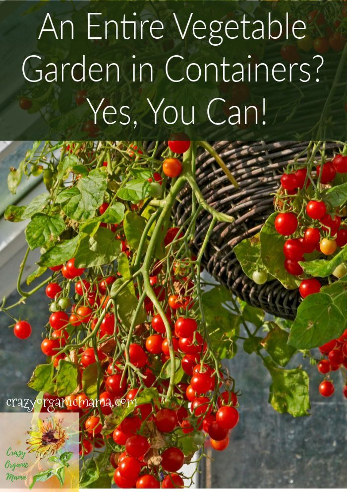 Vegetable Gardening Really want a great vegetable garden this year but you're short on space in your backyard, front yard or maybe all you have is a balcony?  You can still grow any kind of veggies, fruits or herbs you want, from tomatoes to potatoes, strawberries to basil.  Tips for what kind of cont