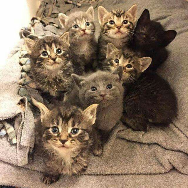 Awww I want them  all.