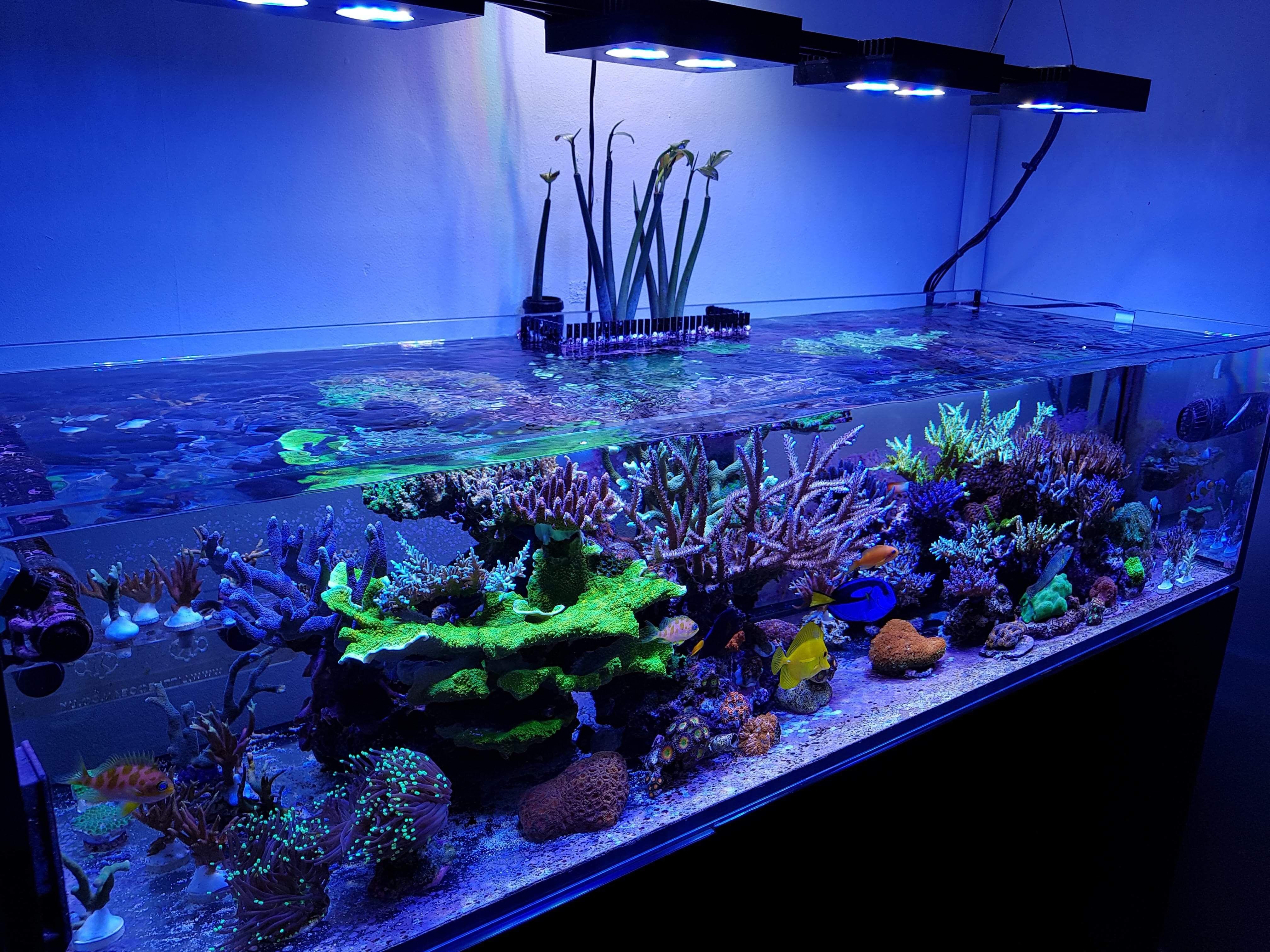 2fecd313fb261ade4420f4031c0e2497 Frais De Aquarium Recifal Complet Concept