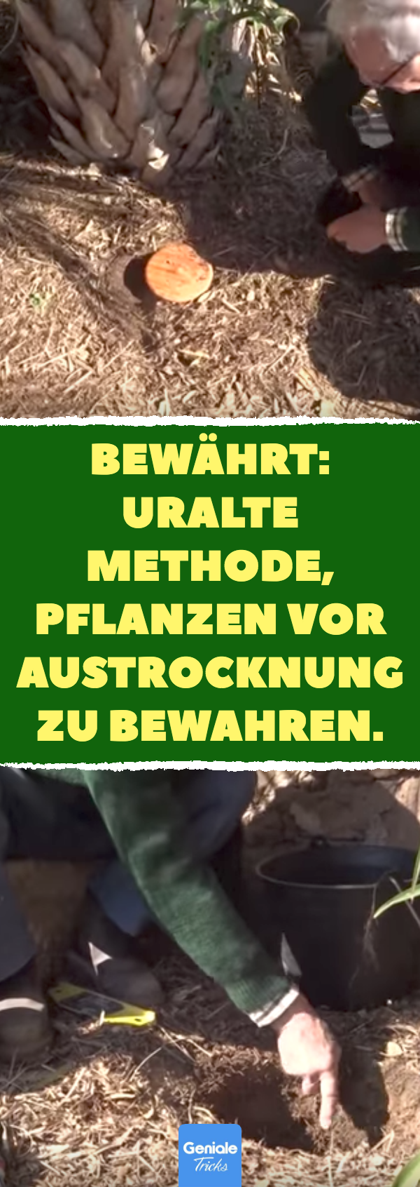 Bewährt: uralte Methode, Pflanzen vor Austrocknung zu bewahren.