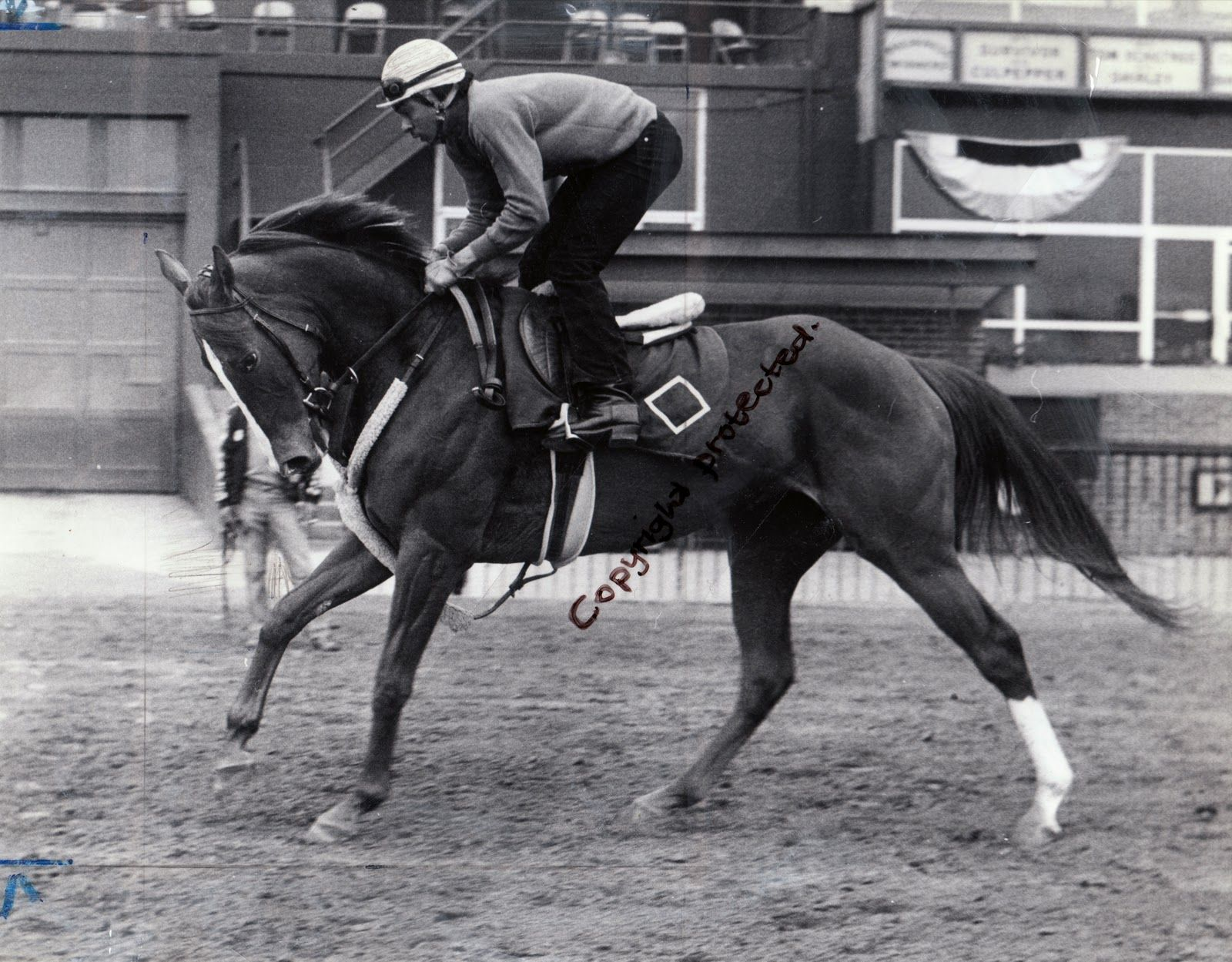 The Power And Beauty Of Genuine Risk Filly Who Won 1980 Kentucky Derby Shown Here In With Her Regular Exercise Rider Luis Hortez