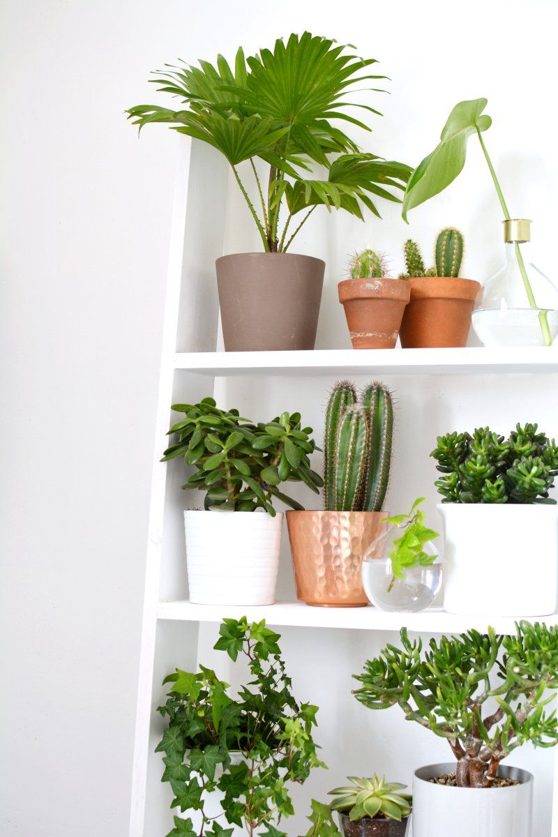 4 ideas for decorating with plants Plants, Indoor plants